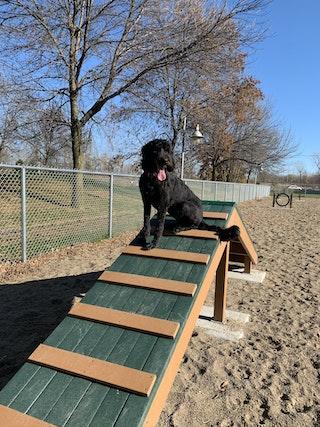 COMM 2020 Parc canin parc des Batisseurs module de jeux chien 2