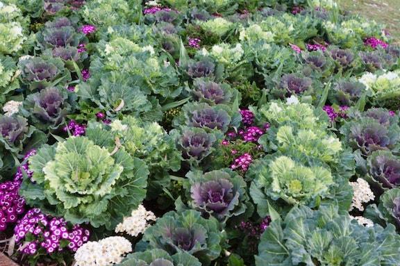 Jardins potagers de facade 2