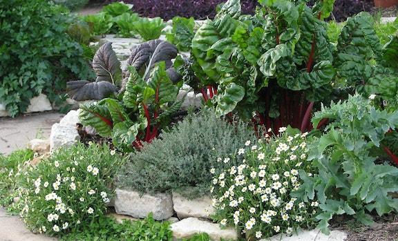 Jardins potagers de facade 4